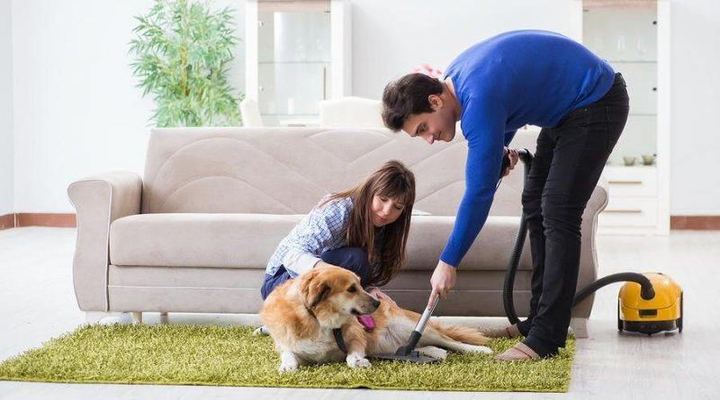 Cleaning Methods for A Pet Owner's Home