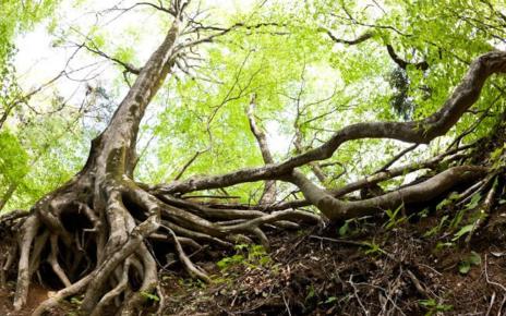 DIY Tips to Kill Tree Roots